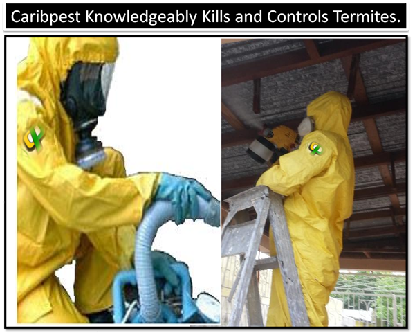 Caribpest Knowledgeably Kills and Controls Termites