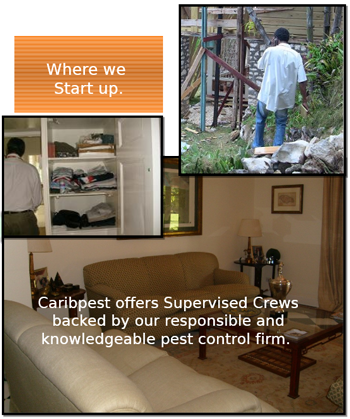 Start Process - Supervised Inspection Crews backed by our responsible and knowledgeable pest control firm